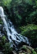 Điểm du lịch sinh thái và diễn giải môi trường Vườn thực vật (tour hàng ngày)